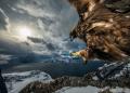 أفضل 35 صورة للحياة البرية لعام 2019