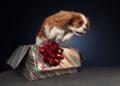 احتفال الكلاب بالكريسماس بعدسة ريانون بوكلي