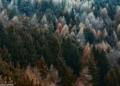 أفضل المشاركات بمسابقة أكثر الغابات سحراً في إيطاليا
