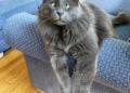 """صور القط """"بيلاروسيا"""" تثير إعجاب الملايين"""